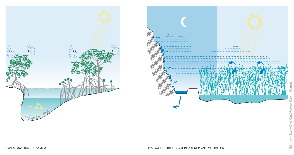 RedToDead_MangroveEcosystem
